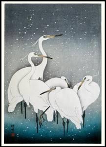 Bilde av Bilde Snowy Herons 50x70