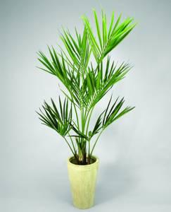 Bilde av Kentia palme 170 cm
