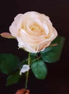 Bilde av Rose cream